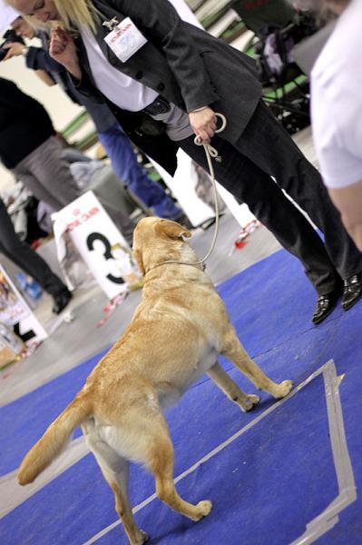stop dog peeing on carpet